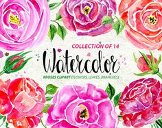 Watercolor flower clipart: 14 roses, Flowers and Leaves, Aquarelle Digital Clip Art, watercolour rose flower clipart