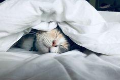 De basis voor een goede nacht slaap is een fijn bed in een omgeving die rust uitstraalt. De inrichting van je slaapkamer is niet iets om wakker van te liggen. Bij Meubelplein Ekkersrijt helpen je graag met het vinden van het interieur van je dromen. #sleep #bedroom #interior #bedroomstyling #wooninspiratie #inspiratie #slaapkamer #bed #matras #inrichting #meubelplein #son #design #slapen #dromen #blog #decoratie #slaapkamerdecoratie #boxspring #bedden #interieur #bedroom…