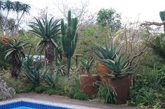 An indigenous South African garden. It can take strong sun and little rain. Cacti And Succulents, Planting Succulents, Cacti Garden, Garden Ideas South Africa, African Plants, Spanish Garden, Garden Maintenance, Water Wise, Desert Plants