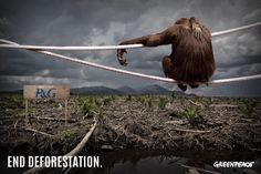 .@Jeff Sheldon Raynor&Gamble, stop using dirty palm oil, end deforestation and #ProtectParadise >>http://bit.ly/1dRwJw3 << pic.twitter.com/kdkMyhLCDU