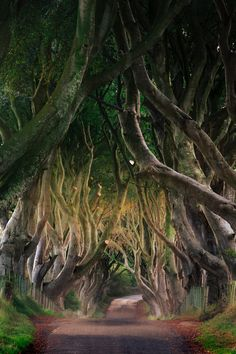 The Dark Hedges in Northern Ireland. | Blog by the Planet D | #Travel #TravelPhotography #Wanderlust #TravelInspiration #NorthernIreland Travel Photos, Travel Tips, Mount Everest Base Camp, Traveling Europe, England And Scotland, Greatest Adventure, Ireland Travel, Lake District, Pilgrimage