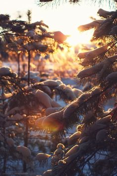 """yuletide-by-the-fireside: """" winterwonderlandthings: """" isawatree: """" Magical winter forest by Dusk-Abomination """" Christmas all year round """" although it's been said many times, many ways, merry. Winter Wallpaper, Christmas Wallpaper, Jurassic World, Winter Sunset, Santa Claus Is Coming To Town, Dark Winter, Christmas Aesthetic, All Nature, Winter Photos"""
