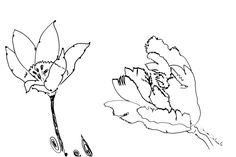DARTGR1115043 #flower #rose #Eye #Black #love #Minimal #DanielaDallavalle #Grafismi #loveistheanswer #ink #sketches #art