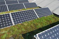 Leg een groen dak aan... - Nudge - duurzaam consumentenplatform