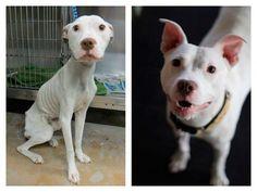 10 fotos de perros antes y después de ser rescatados, ¡sorprendente!