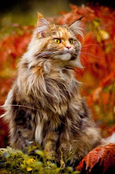 Fall -cat in camo...a beauty.