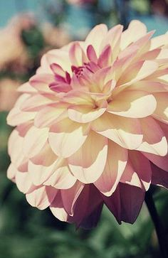 "Dahlias are one of my favorites and were my ""wedding"" flower"