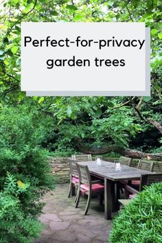 The 8 best perfect-for-privacy garden treesYou can find Gardening and more on our website.The 8 best perfect-for-privacy garden trees Back Gardens, Small Gardens, Outdoor Gardens, Privacy Plants, Garden Privacy, Planting For Privacy, Backyard Trees, Backyard Landscaping, Landscaping Ideas