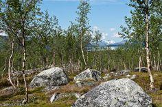 Kilpisjärvi, Lapland, Finland, July 2009 by Heikki Rantala