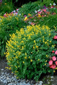 Welcome spring with flowering annuals that paint the landscape in living color.
