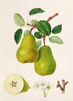William Hooker. Botanical illustration, flowers, fruits, nature, card