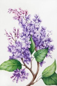 "Saatchi Art Artist Tanya Azarchik; Painting, ""Lilac"" #art Tatoo Floral, Lilac Tattoo, Lilac Painting, Painting & Drawing, Painting Abstract, Botanical Illustration, Botanical Prints, Watercolor Flowers, Watercolor Paintings"