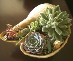 Seashell Terrarium. $40.00, via Etsy.