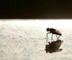 Study finds houseflies may spread disease - Sky News Australia #757Live