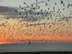 Sunset in South Haven...photo by Andrea Asbell