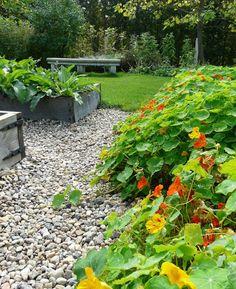 Garden, Plant, Garten, Lawn And Garden, Gardens, Gardening, Outdoor, Yard, Tuin