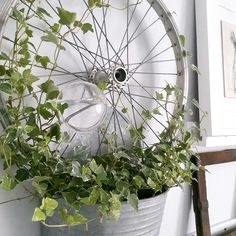 Hoop as growth support + watering ball – World of Flowers Garden Junk, Garden Gates, Container Plants, Container Gardening, Pergola Patio, Backyard, Black Dog Salvage, Bicycle Decor, Shade Garden