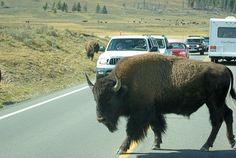 Hayden Valley. Yellowstone National Park – September 15, 2007.