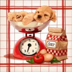 Cazenave Puppy Kitchen Ceramic Accent & Decor Tile - MC2-003bAT