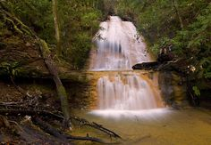 big basin redwood state park   Big Basin Redwoods State Park-Fun Places California-Things To Do in ...