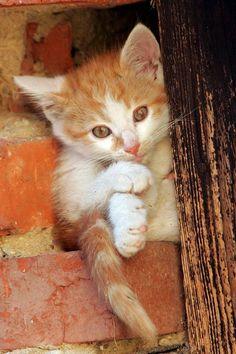 Kitten Kawaii (*^^*)