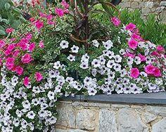 Resultado de imagen para flores de frio y sol