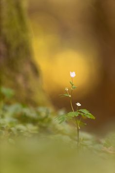 Superb Nature - Last flower standing by georg_essl. Photo Background Images, Photo Backgrounds, Flowers Nature, Beautiful Flowers, Miniature Photography, Bokeh Photography, Flower Stands, Happy Paintings, Light Of The World