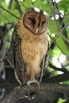 Hey y'Owls!