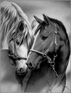Les chevaux - Song Tutorial and Ideas Beautiful Arabian Horses, Most Beautiful Horses, Majestic Horse, Pretty Horses, Animals Beautiful, Horse Drawings, Animal Drawings, Animals And Pets, Cute Animals