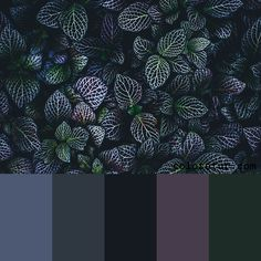 Dark Foliage - Dark, fleshy foliage gives a moody feel to this color palette The Effective Pictures We Offer You About wedding color palette generator A quality picture can tell you many things. Pastel Colour Palette, Colour Pallette, Colour Schemes, Color Combos, Wedding Color Palette Generator, Wedding Color Pallet, House Color Palettes, Web Design, Aesthetic Colors