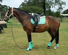 Mint saddle pad set Thanks Lindsay for sending us this super cute pic #matchymatchy #equestrian #horseriding Matching tack sets on sale now!