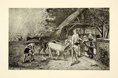 1884 Engraving Greedy Calves Cow Children Farm Agriculture Animal Webe - Period Paper
