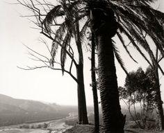 Découvrez Robert Adams, un amoureux de la #nature ! #photographe #photographie #paysage #minimaliste