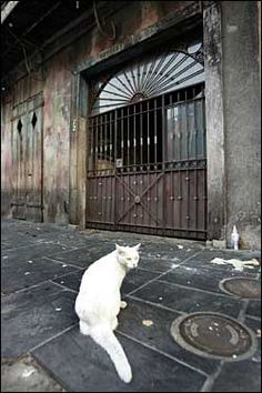 Preservation Hall jazz cat