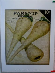 $18.99  Parsnip Vegetable ART Print Heirloom Variety IV BY Jarman Fagalde | eBay