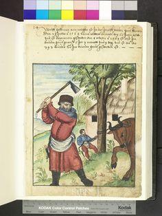 Butcher killing an ox  1564. Die Hausbücher der Nürnberger Zwölfbrüderstiftungen