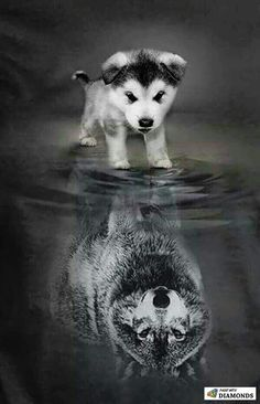A little pup thinks that he is more then he really is a wolf, a alpha, a leader. - A little pup thinks that he is more then he really is a wolf, a alpha, a leader. Cute Baby Animals, Animals And Pets, Funny Animals, Cute Puppies, Cute Dogs, Dogs And Puppies, Doggies, Wolf Puppies, Beautiful Creatures
