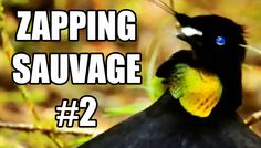 L'oiseau le plus cool du monde - ZS n°2