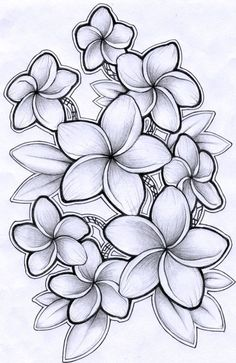 Drawing Of Hawaiian Flower Drawing Of Hawaiian Flower. Drawing Of Hawaiian Flower. Hawaiian Shirt Drawing Flower Necklace Tattoo Step by Pink in hawaiian flower drawing Drawing Of Hawaiian Flower Plumeria Drawing by Timchris with Images Hawaiianisches Tattoo, Leg Tattoos, Tattoo Drawings, Sleeve Tattoos, Necklace Tattoo, Shirt Drawing, Thai Tattoo, Symbol Tattoos, Maori Tattoos