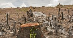 Desmatamento aumenta quase a 30% na Amazonia