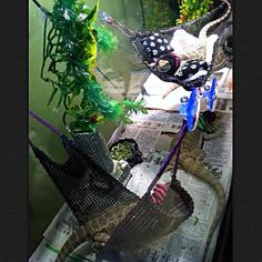whole set hammock 4 baby bearded dragon   mercari  anyone can buy  u0026 sell ny giants print attachable resting bed   mercari  anyone can buy      rh   pinterest