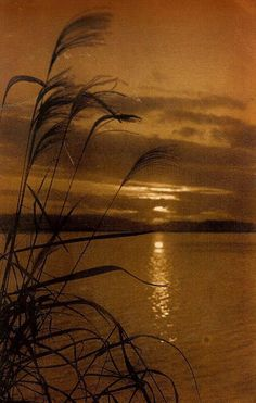 """Pictoralism in old Japan. The Okinawa Soba ( Rob ) collection. Photographer unknown, """"Suzuki Grass at Sunset """". Japanese Photography, Art Photography, Vintage Photography, Black White Photos, Black And White, Brown Eyed Girls, Sunset Lover, Brown Aesthetic, Okinawa"""