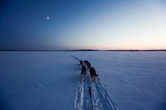 Arctic Love: Way, Way Out erämaassa - haastattelu Brice Portolano Survival Gear, Survival Skills, Utah, Husky, Arctic Landscape, Great Photographers, Photo Projects, Photo Essay, Paris