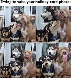 ~Pet Pics I Like~ Why I Love Dogs..-Album Source:imgur.com -Lol...oh my goodness, these cuties are all trying so hard to be good dogs, and they're being such sweethearts. My dog would never have the patience for a similar photo shoot.