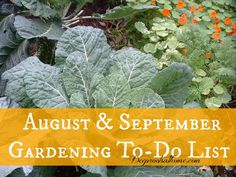 Think of August and September as a time to do spot cleanup ~ a little like when you rinse off the mustard spot on your sleeve rather than wash the whole shirt.  I can't turn gnarly, dried leaves back to green, but I can try to pretty up the place with some targeted mulching and toss spent plant debris into the compost bin. It will make for greater visual enjoyment in late summer and fall and reduce hiding places for pests and disease. August & September Gardening To-Do ListDeep Roots at Home
