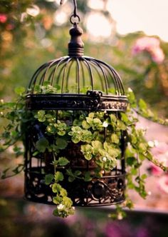 ideas for hanging bird cage decor wedding Hanging Bird Cage, Hanging Planters, Hanging Baskets, Birdcage Planter, Birdcage Decor, Pot Jardin, Deco Nature, Flower Planters, Garden Projects