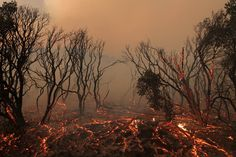 David McNew, Fallen brush glows immediately after the Powerhouse fire passed south of Lake Hughes, California, June 1, 2013