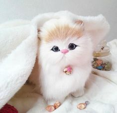 cute cats - Google'da Ara