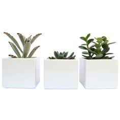 Materas blancas con Plantas naturales Set x 3 by Habibi   $81.000 COP