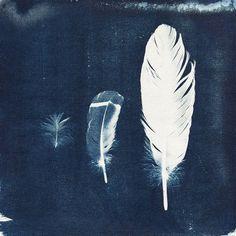Feather cyan-o-type